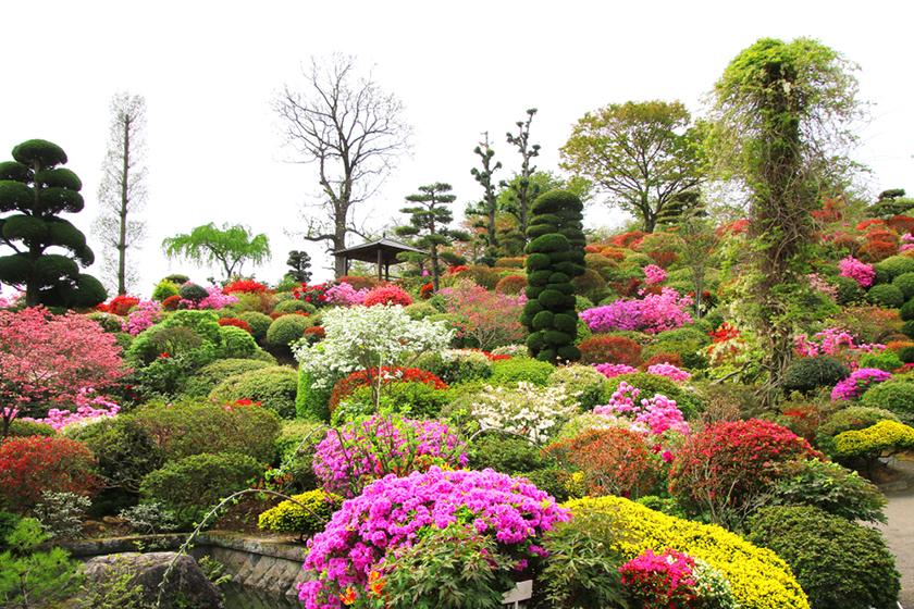 大桑原杜鵑公園 ogawara_azalea_garden